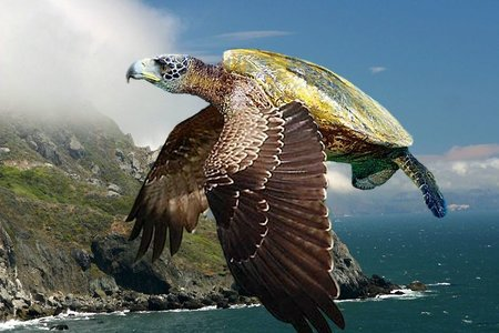 rsz_flying_turtle_by_dwarf4r-d71n1lr